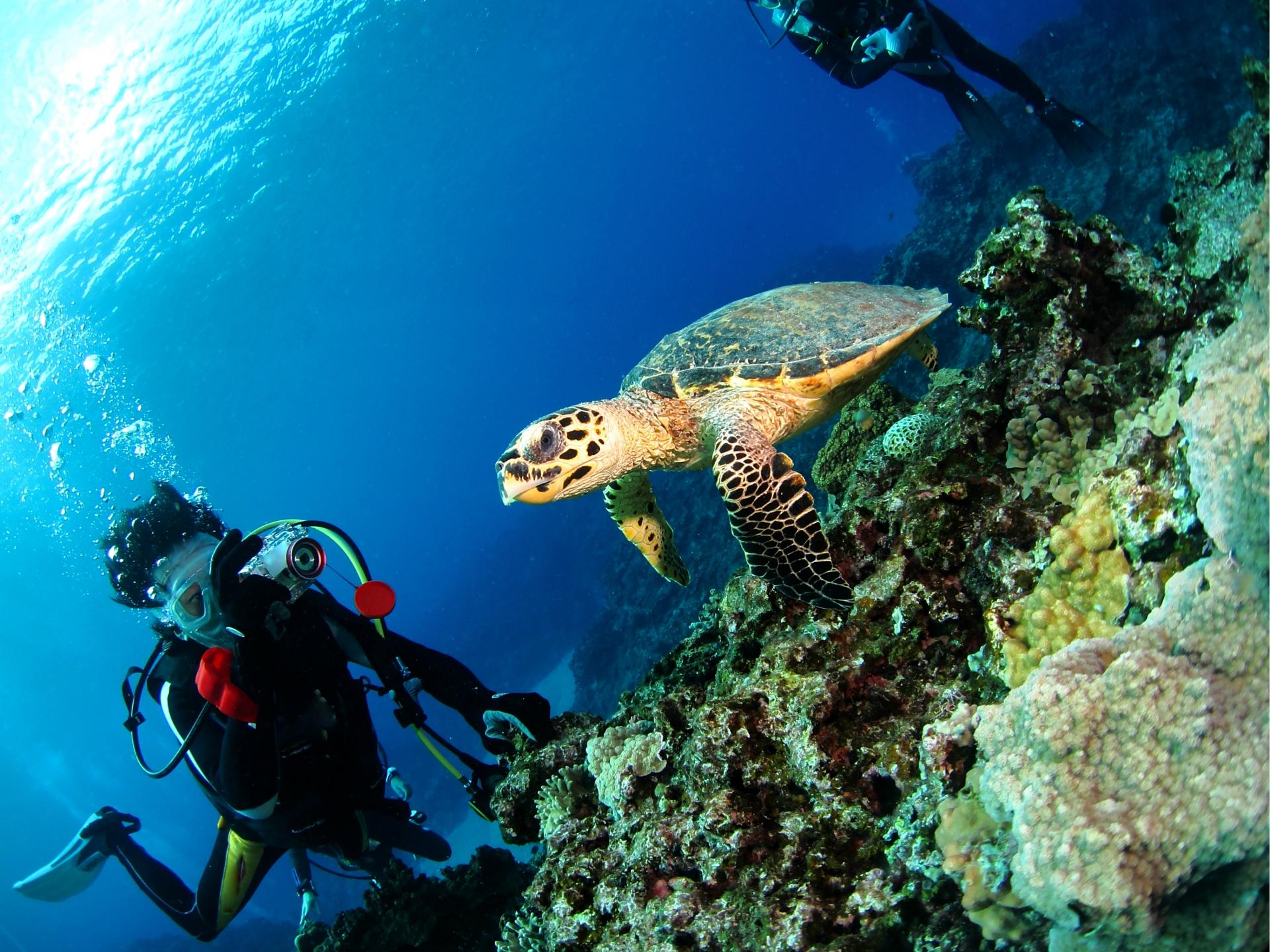 ウミガメを見る体験ダイビング