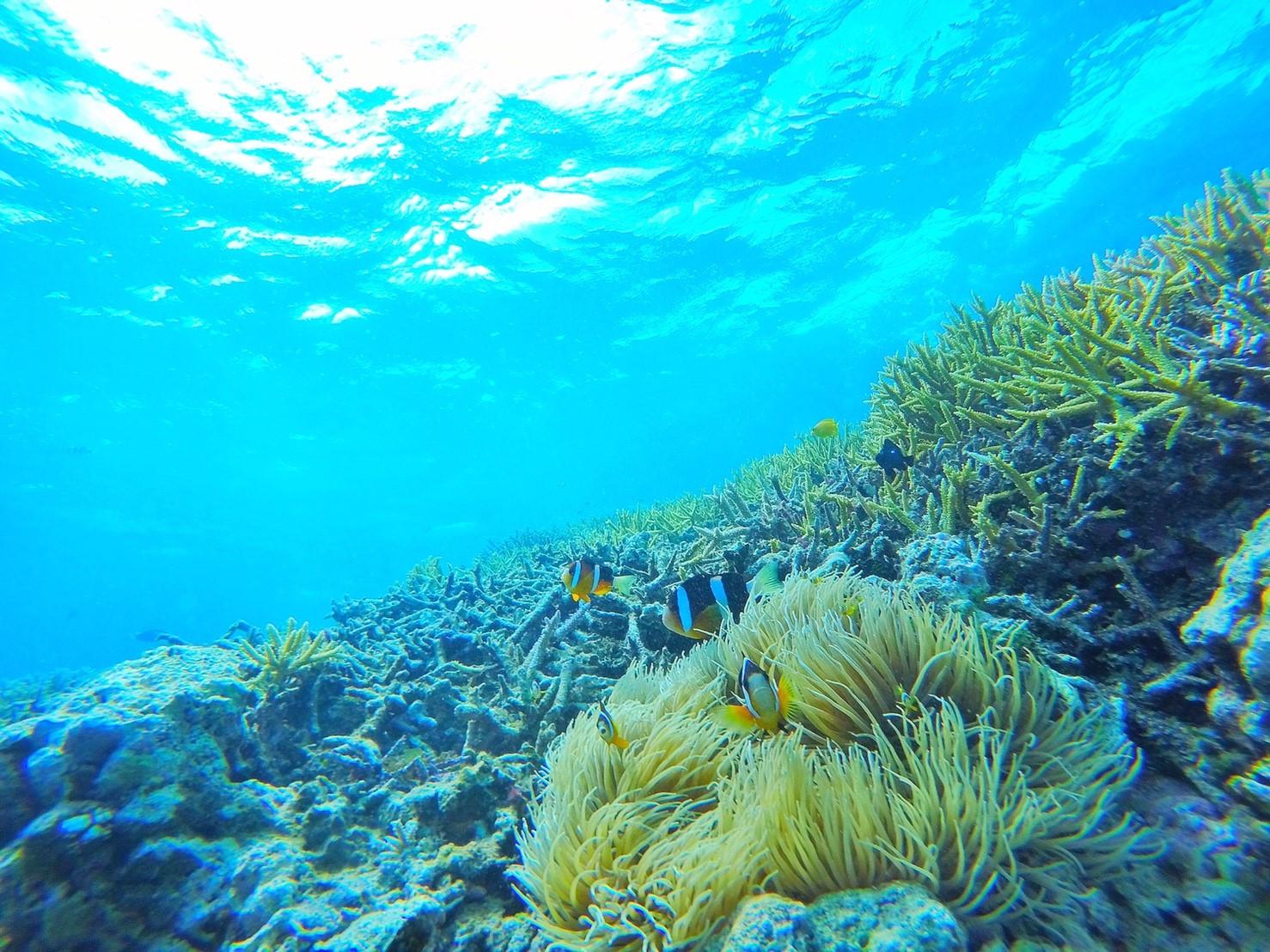 体験ダイビングで見ることのできる海中風景