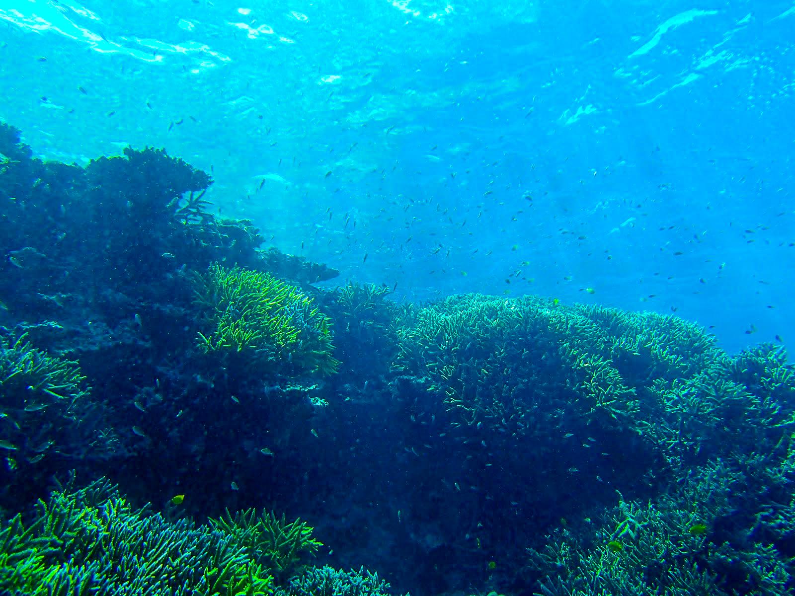 小浜島の海中風景