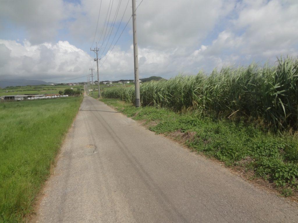 サトウキビ畑が左右に広がる