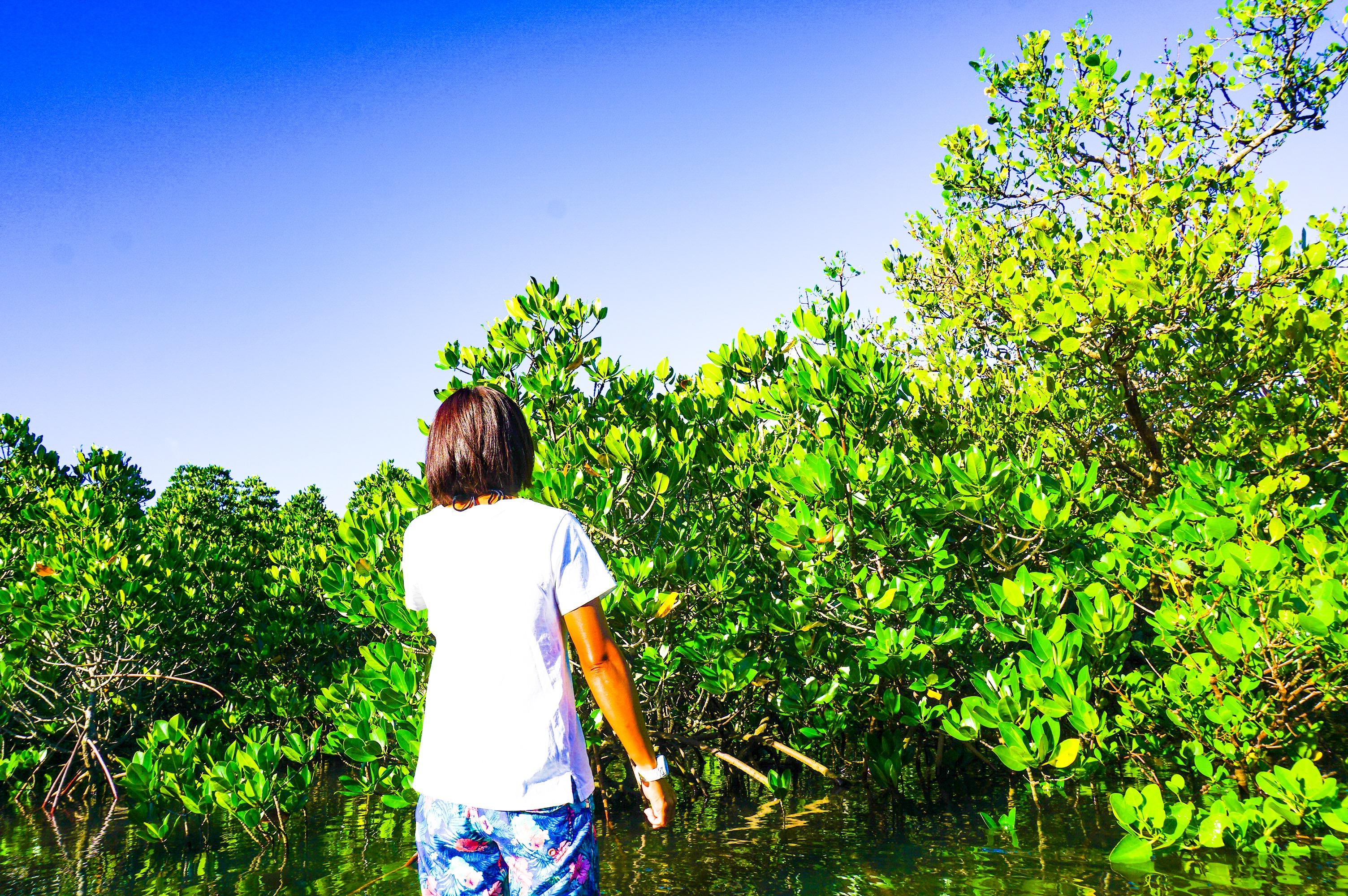 一人旅でマングローブ散策
