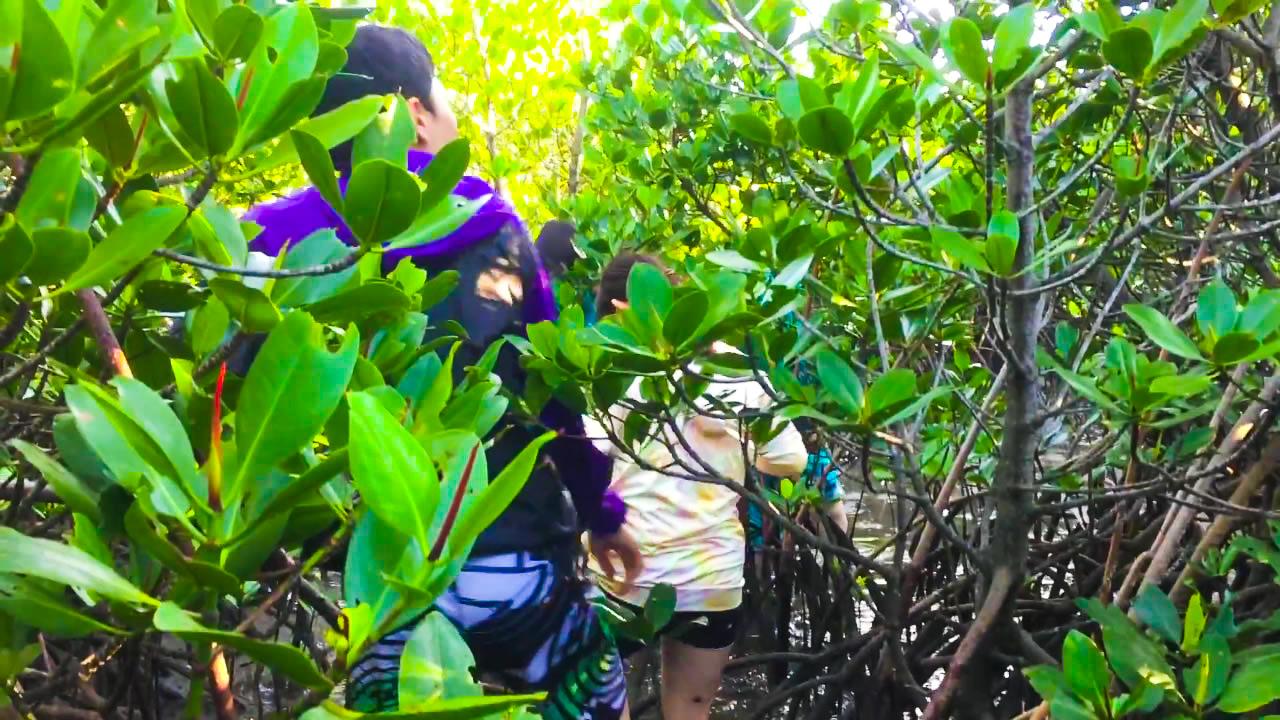 小浜島のマングローブを散策