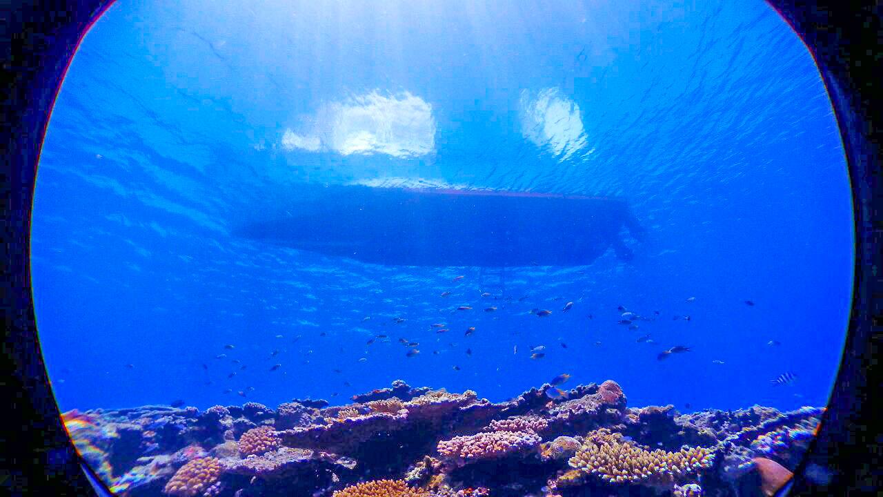 小浜島の体験ダイビング