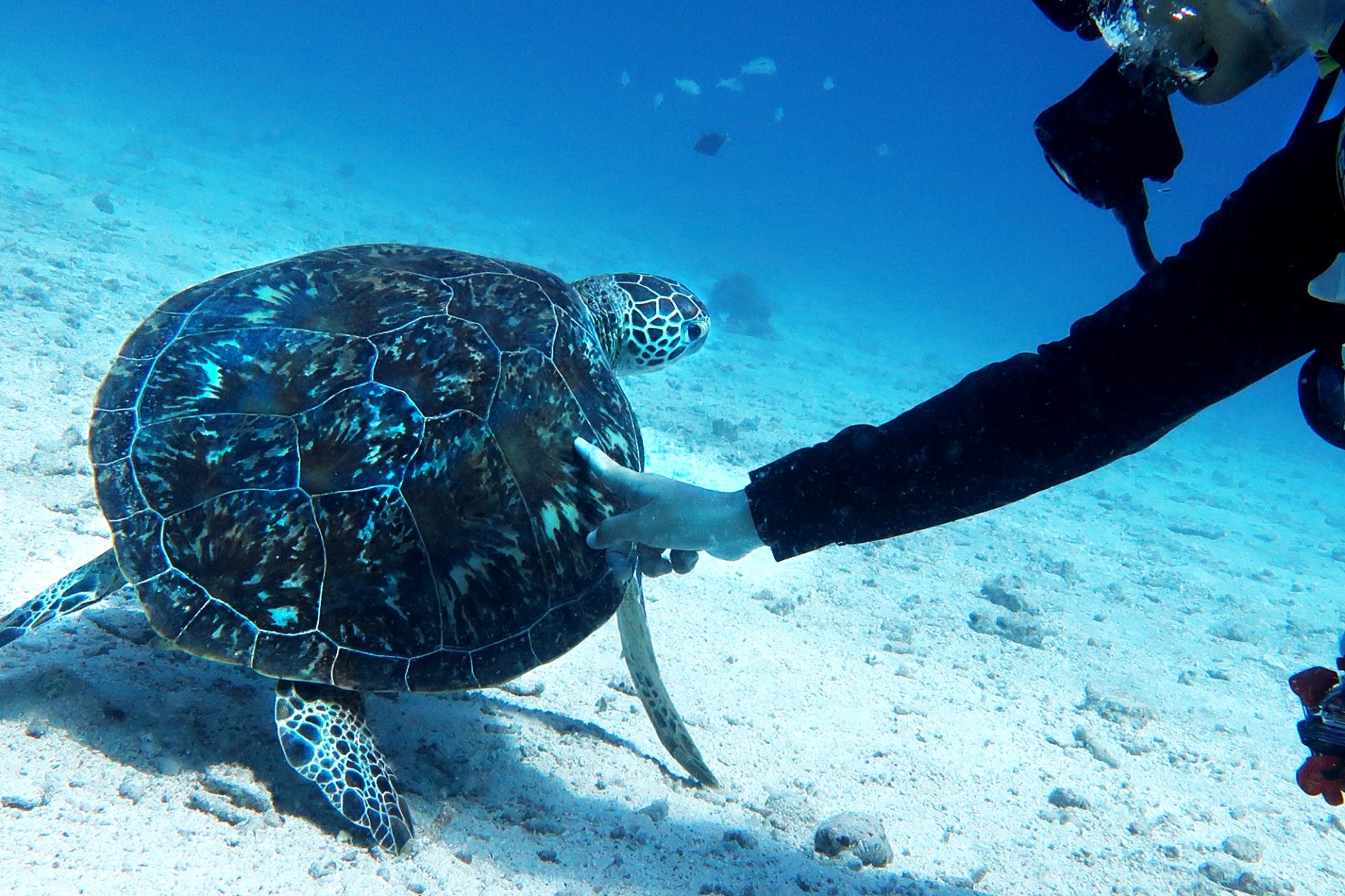 体験ダイビングでウミガメと出会う